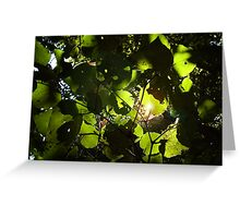 Backlit leaves Greeting Card