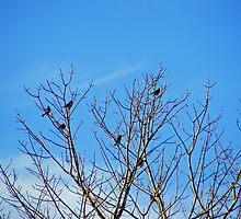 January Robins by Rebecca Brann