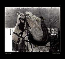The Draft Horse Fine Art Poster by Wayne King