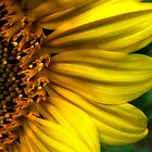 Girasol by Jamie Lee