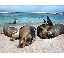 Sealions just Coolin' it Photographic Print