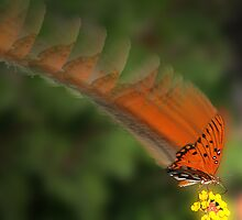Gulf Fritillary by Kirk Allemand