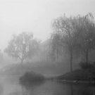 Island of Fog by Nancy Stafford