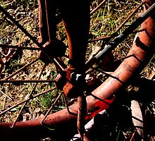 Tricycle by Jessie Harris