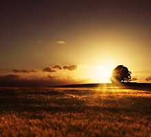 Sunset by Lasse Damgaard