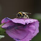 Pollination by avionz