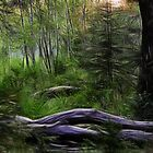 Enchanted Forest by Tracy Deptuck