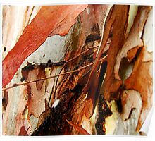 'Eucalypt Sculpture' Poster