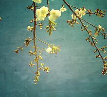 Blossom by Jackie Cooper