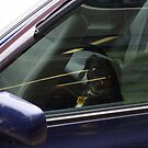 Nervous passenger by Geoff46