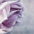 purple rose by lucyliu