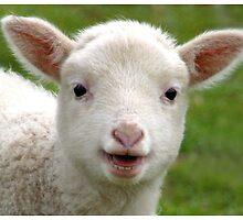 Mary's Lamb by Beaner