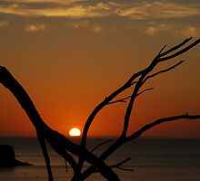 orange branch by Rae Stanton