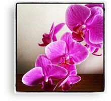 Orchid Fall Canvas Print