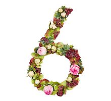 The number six Part of a set of letters, Numbers and symbols of the Alphabet made with flowers by PhotoStock-Isra