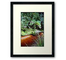Fern glade Framed Print