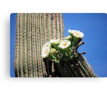 Tipped Saguaro Blooms Canvas Print
