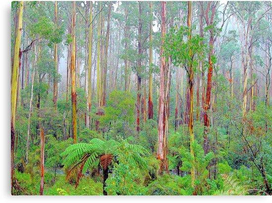 Lifes a Beech - Marysville , Yarra Ranges National Park Victoria Australia by Philip Johnson