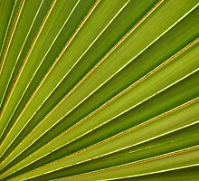 Palm Frond by Daniel Attema