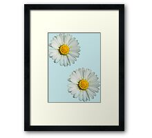 Two white daisies Framed Print