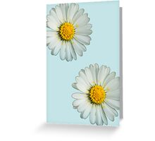 Two white daisies Greeting Card