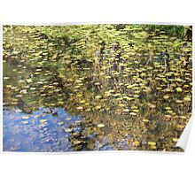 Leaves on a Pond in Japan Poster
