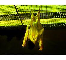Gone Batty Photographic Print