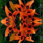 Reflecting Orange by Christina Sauber