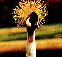 Crested Crane by Julie Marks