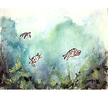 3 sea turtles Photographic Print