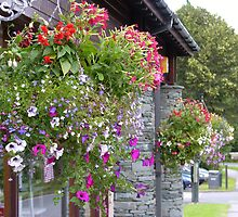 Hanging Baskets by Tom Gomez