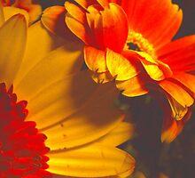 January Heat by sknelson