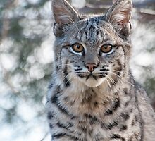 Looking serious by Eivor Kuchta