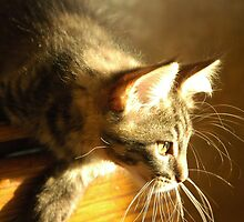 Hunting /my cats/ by pivo