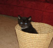kitty in a basket by jeanmarie