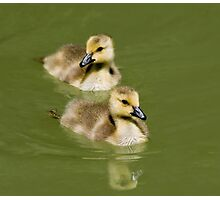 Two Goslings Photographic Print