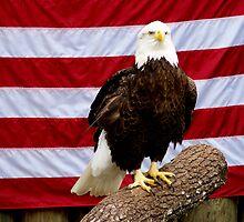 American Pride by Swank