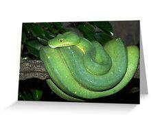 Green Tree Python. Greeting Card
