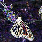 Glowing Butterfly by Pat Moore