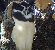camouflage owl by cadburylove