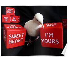 I'm A Love-A-Dove - White Collard Dove - NZ Poster