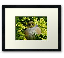 I'm Camouflaged In A Web!  - Silvereye - Wax Eye - New Zealand Framed Print