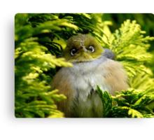 I'm Camouflaged In A Web!  - Silvereye - Wax Eye - New Zealand Canvas Print