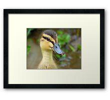 Have YOU Twigged On Yet? - Mallard Duckling - NZ Framed Print