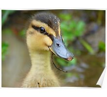Have YOU Twigged On Yet? - Mallard Duckling - NZ Poster