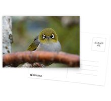 What now! Silvereye - NZ - Southland Postcards