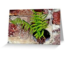 Fern in sandstone wall Greeting Card
