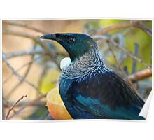An Outfit Is Incomplete Without A LaCie Collar - Tui - NZ Poster