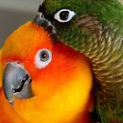 Hang On... Yip... I Got That Nasty Little Pin... - Conures - NZ by AndreaEL