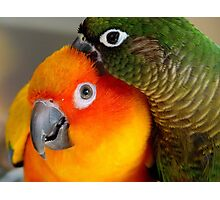 Hang On... Yip... I Got That Nasty Little Pin... - Conures - NZ Photographic Print